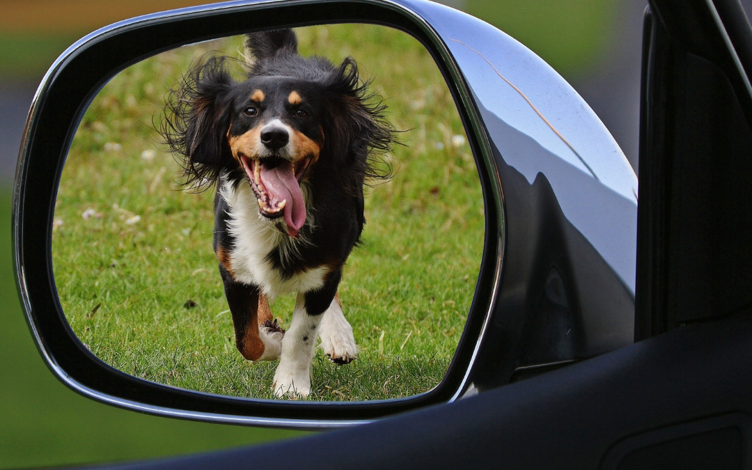 The Dog Catches Car Problem